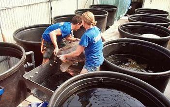 Archelon Sea Turtles Rescue Center