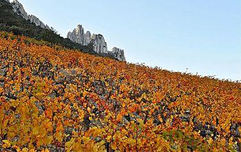 Klados Winery
